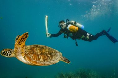 Queen's Baton Relay goes underwater for the first time in the Great Barrier Reef!