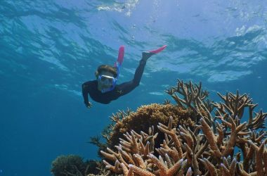Scientists praise for Agincourt Reef