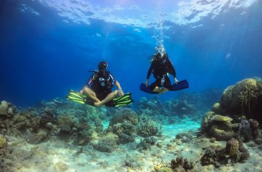 New Ribbon Reef minke whale trips with Pro Dive Cairns