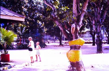 Green Island Bikini Tree, a blast from the past!